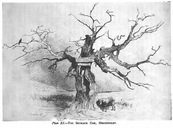 The Skyrack Oak, Headingley by John Nicholas Rhodes